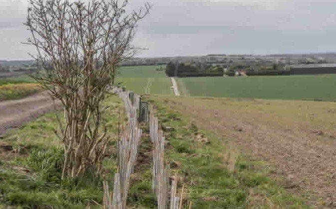 wildlife corridor hedge